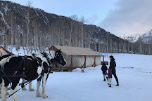 Telluride Sleighs and Wagons, Telluride, United States