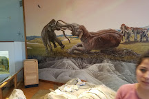 Trailside Museum of Natural History, Crawford, United States