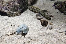 Aquarium de la Guadeloupe, Le Gosier, Guadeloupe