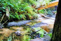 Butano State Park, Pescadero, United States