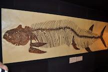 The Big Fish Fossil Hut, Peak Hill, Australia