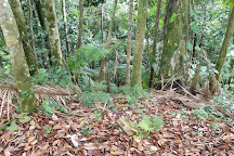 Big Tree Trail, El Yunque National Forest, Puerto Rico