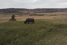 Simba Paka Safaris, Nairobi, Kenya