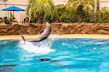 Siegfried & Roy's Secret Garden And Dolphin Habitat, Las Vegas, United States