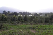 Fruit Forest Farm, East Feluga, Australia