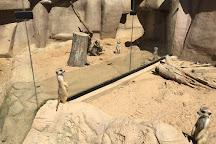 Metro Richmond Zoo, Moseley, United States