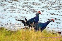 Mavoor Wetlands, Kozhikode, India