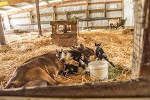 Harley Farms Goat Dairy, Pescadero, United States