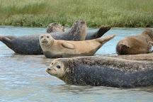 Dover Sea Safari, Dover, United Kingdom