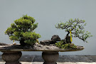 Chinese and Japanese Gardens
