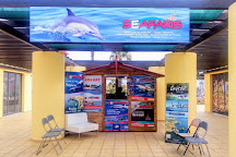 Dolphin Seafaris, Lagos, Portugal