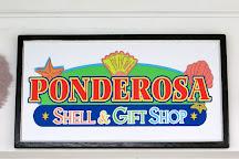 Ponderosa Shell & Gift Shop, Spanish Wells, Bahamas