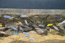 Pearson Park Wildlife Garden, Kingston-upon-Hull, United Kingdom