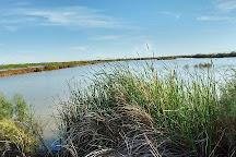 Davis-Schrimpf Seep Field, Niland, United States