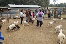 Golden Ridge Animal Farm, Dural, Australia