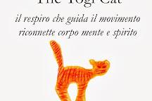 The Yogi Cat, Isola d'Arbia, Italy