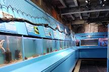 Lyme Regis Marine Aquarium, Lyme Regis, United Kingdom