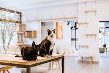 Suara Foundation Cat House, Barcelona, Spain