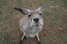 Phillip Island Wildlife Park, Cowes, Australia