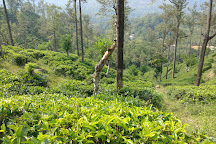 Kinellan Tea Factory, Ella, Sri Lanka