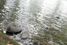 Sarapiqui River, Province of Heredia, Costa Rica