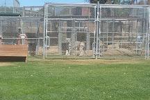 Lions, Tigers & Bears, Alpine, United States