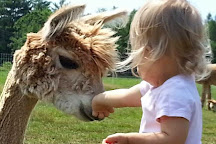Northern Solstice Alpaca Farm, Unity, United States