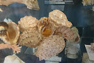 Jeffrey's Bay Shell Museum (Charlotte Kritzinger Shell Museum)