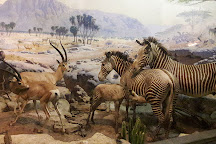 Museum of Nature & Science, Las Cruces, United States