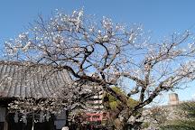 Umezono Migawari Temmangu Shrine, Nagasaki, Japan