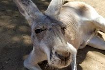 Outback Kangaroo Farm, Arlington, United States