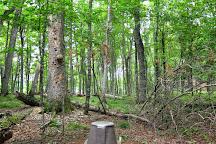 Sylvania Wilderness, Watersmeet, United States