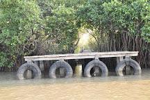 Pichavaram Mangrove Forest, Chidambaram, India