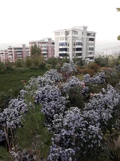 شهرک خواجه رواش Khawaja Rawash City