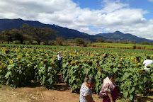 Finca Los Girasoles, Esquipulas, Guatemala