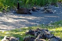 McArthur Island Park, Kamloops, Canada