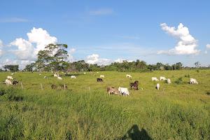 inmobiliaria Selva Perú 0