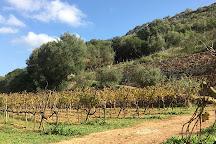 Vins Miquel Gelabert, Manacor, Spain