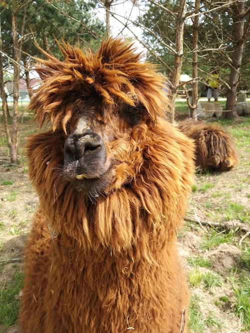 Dundaga Exotic Animal Zoo