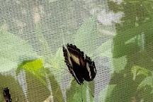 Butterfly Hill, Nambour, Australia