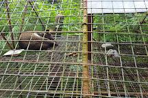 Xzootic Animal Park, Loay, Philippines
