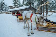 Santa Claus Reindeer, Rovaniemi, Finland