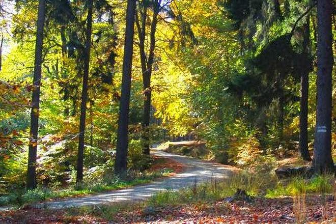 Naturpark Hochtaunus, Oberursel (Taunus), Germany