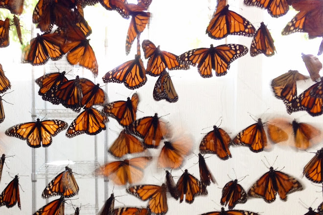 Idlewild Butterfly Farm, Louisville, United States