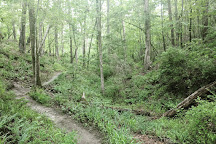Harbison State Forest, Columbia, United States
