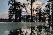 Lake Martin Rookery, Lafayette, United States