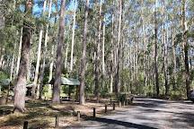 Bongil Bongil National Park, Bonville, Australia