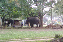 Viharamahadevi Park, Colombo, Sri Lanka