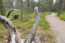 Pyhatunturi, Pelkosenniemi, Finland