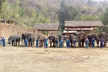 Thai Elephant Home, Mae Taeng, Thailand